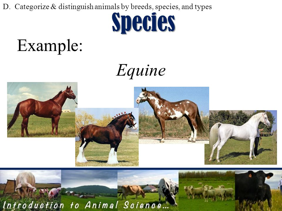 Example Of Species Image Collections Example Cover Letter For Resume