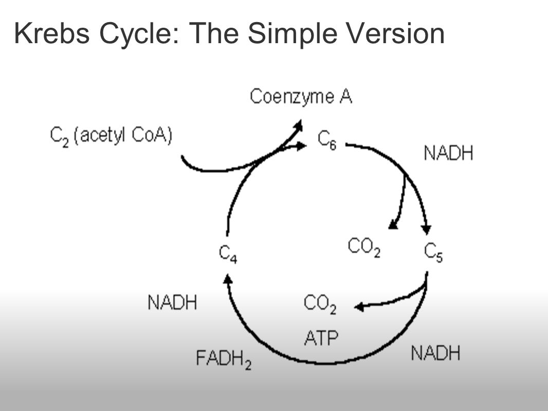 krebs cycle khan