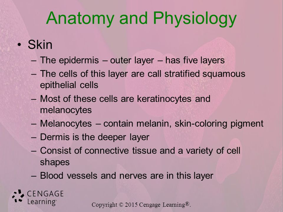 Funky Skin Ppt Anatomy And Physiology Inspiration - Anatomy And ...