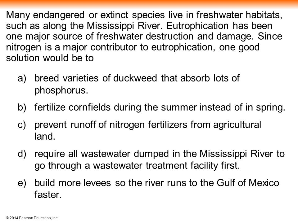 breed varieties of duckweed that absorb lots of phosphorus.