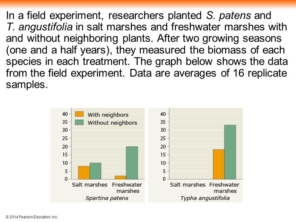 In a field experiment, researchers planted S. patens and T