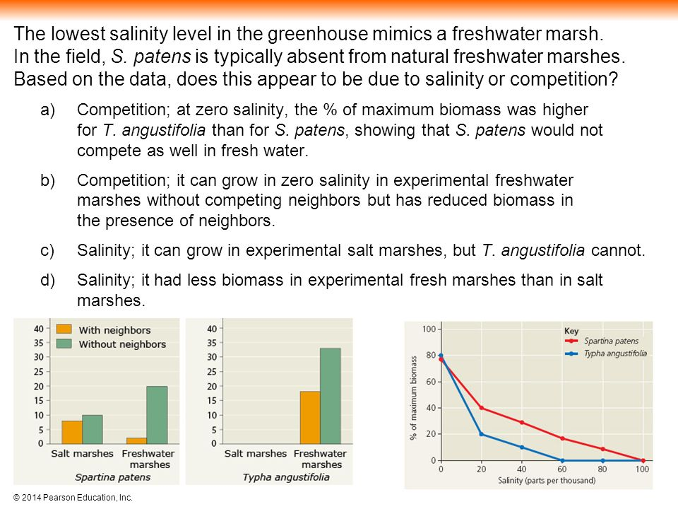 The lowest salinity level in the greenhouse mimics a freshwater marsh