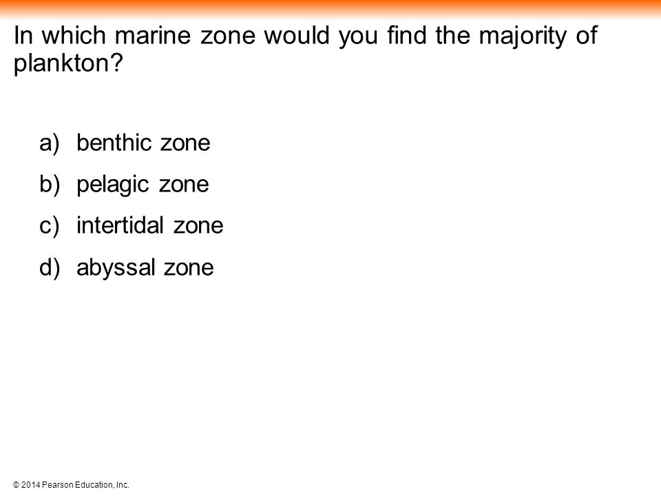 In which marine zone would you find the majority of plankton