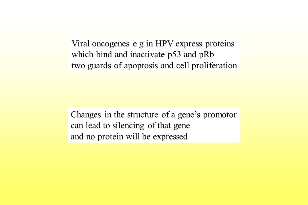 Viral oncogenes e g in HPV express proteins