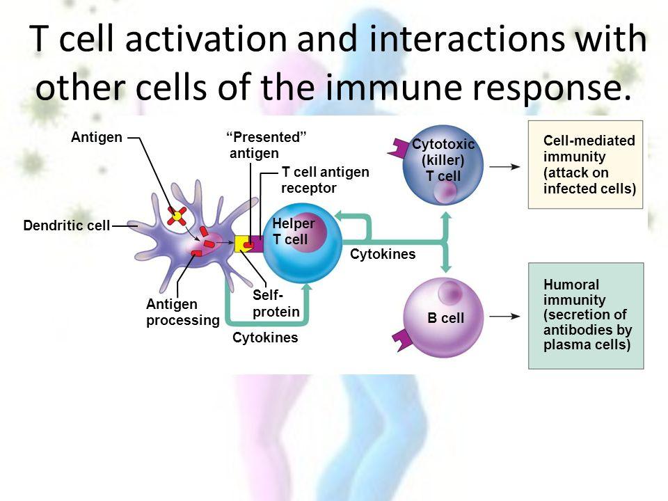 cell mediated immune response pdf