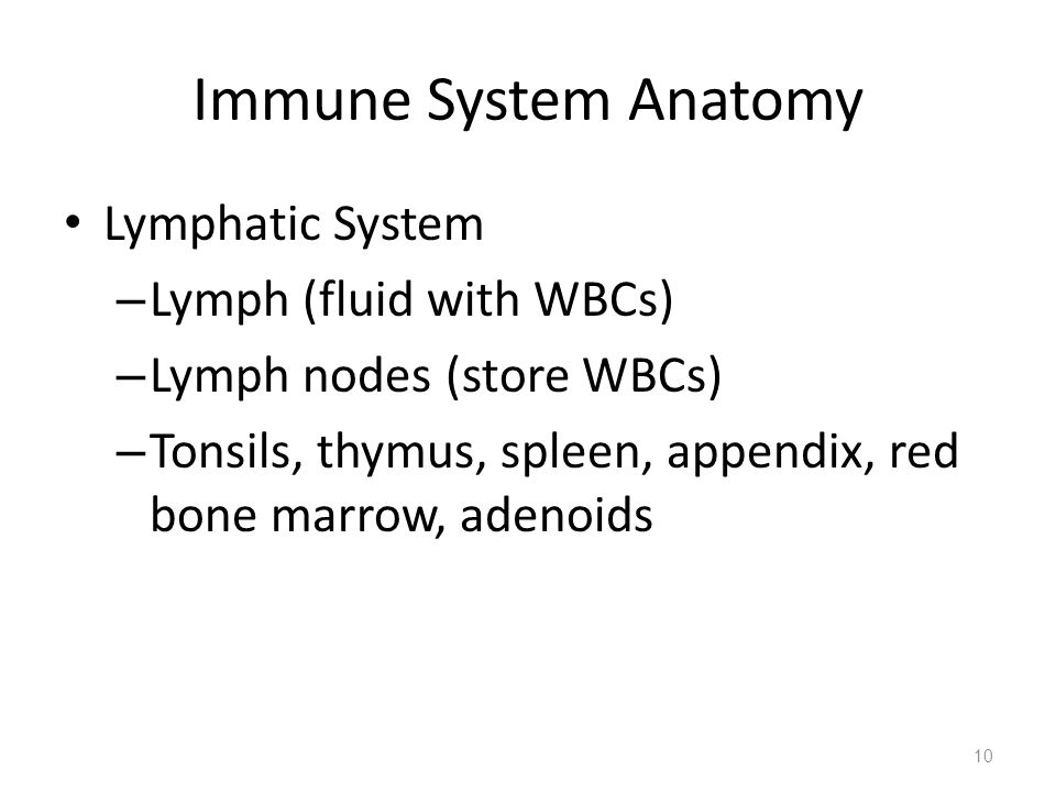 Immune System Anatomy Lymphatic System Lymph (fluid with WBCs)