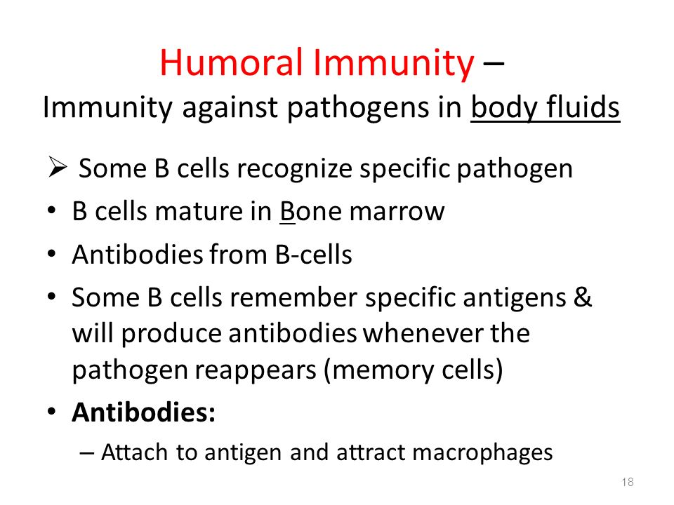 Humoral Immunity – Immunity against pathogens in body fluids