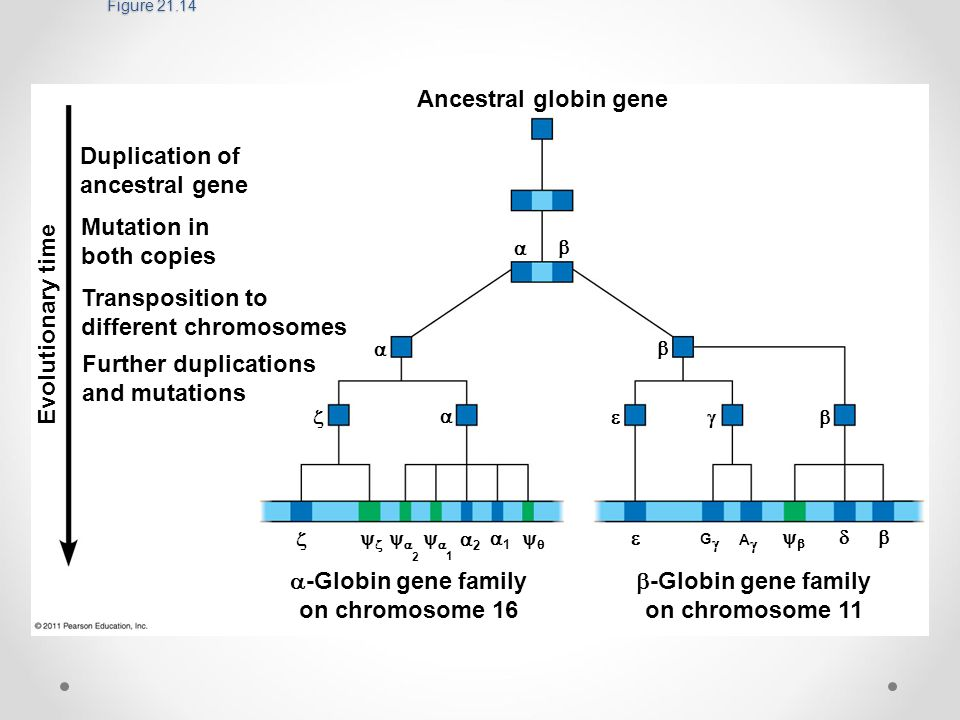 Dating gene duplications