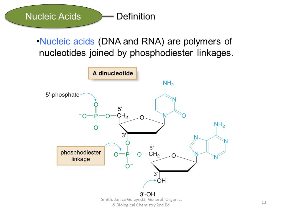 the biological description of the nucleotides Part of molecular & cell biology for dummies cheat sheet macromolecules are just that - large molecules the four groups of macromolecules contain n in rings, nucleotides made of sugar, phosphate and nitrogenous base: lipid (glycerol, fatty acids.