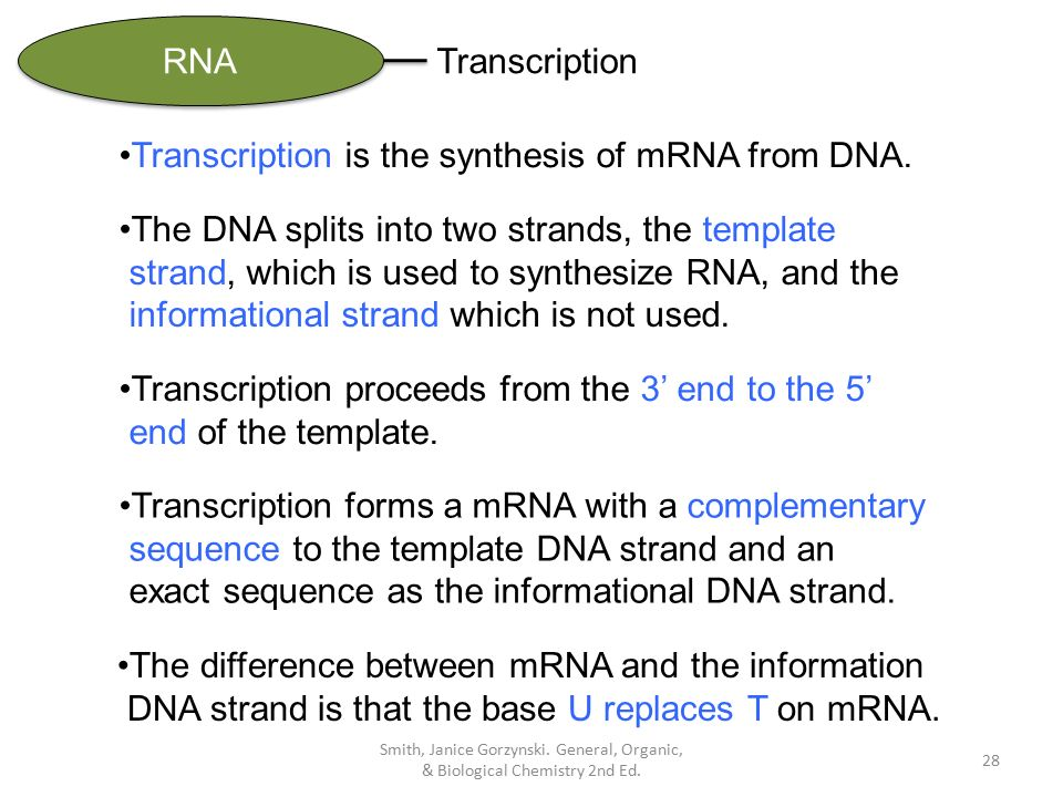 when an rna strand forms using dna as a template - chapter 22 nucleic acids protein synthesis ppt download