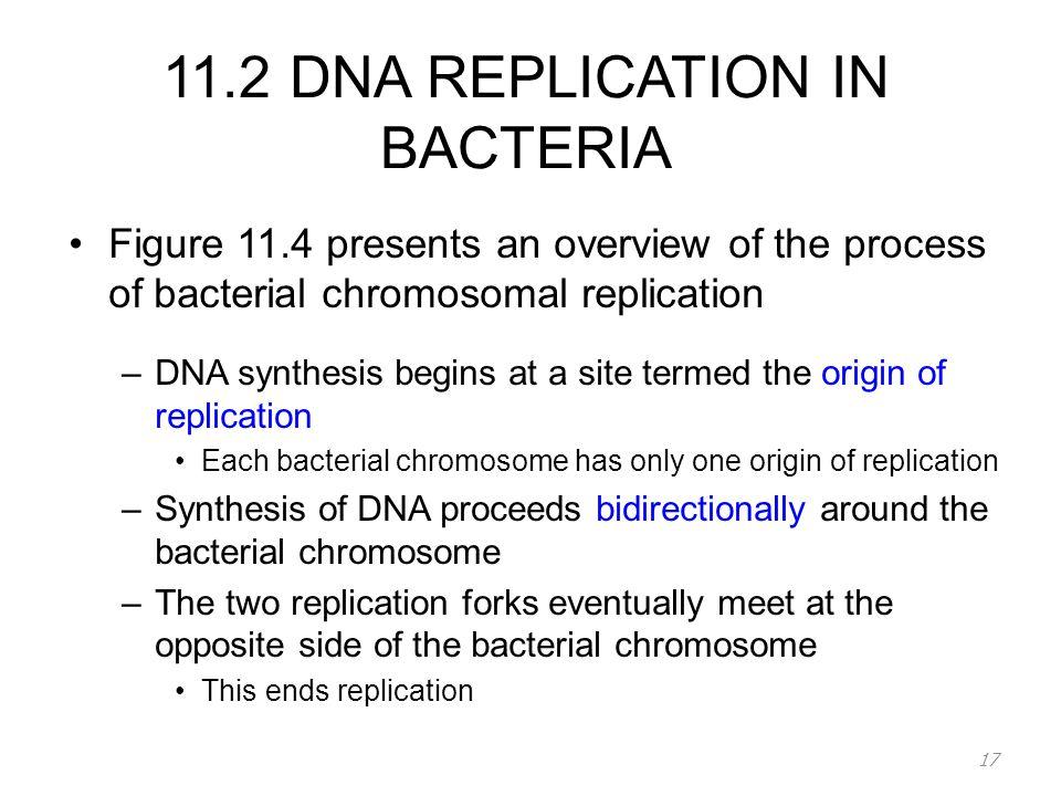 bacterial dna replication