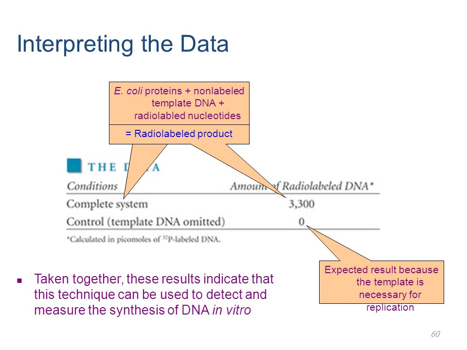 Lecture 2 chapter 11 dna replication ppt download interpreting the data e coli proteins nonlabeled template dna radiolabled nucleotides pronofoot35fo Image collections