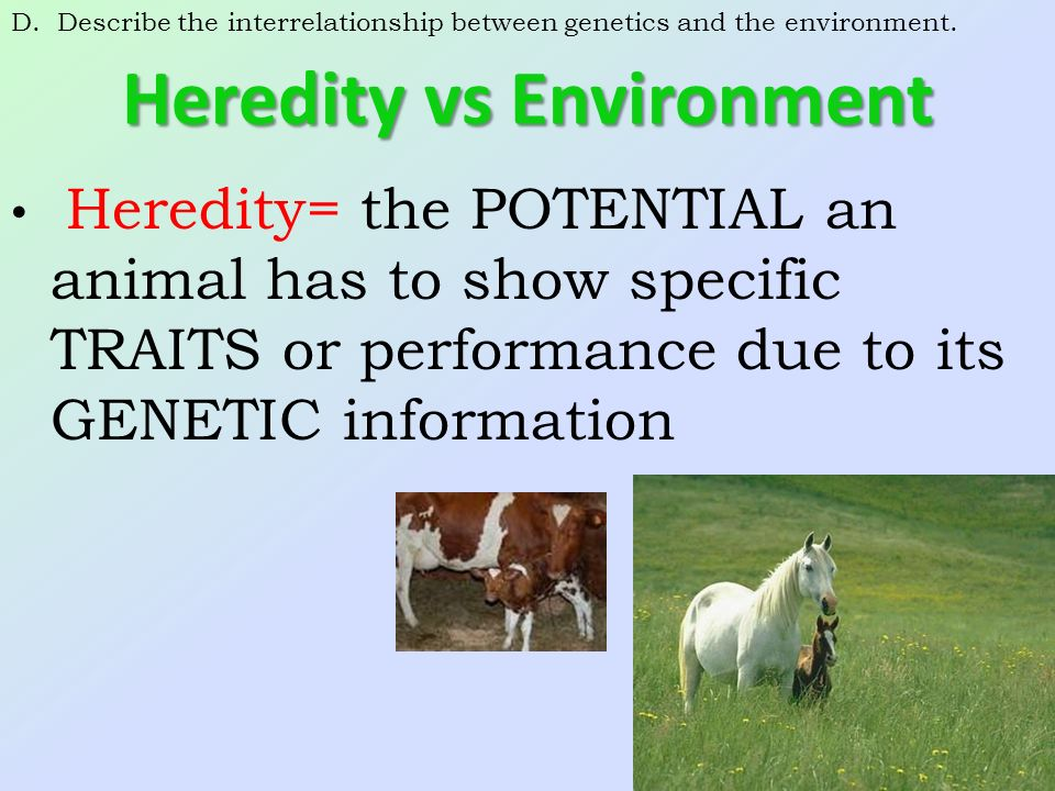 heredity and environment The nature vs nurture debate has been going on since the early ages, but the heat is still on between the belief that our genes dictate all.
