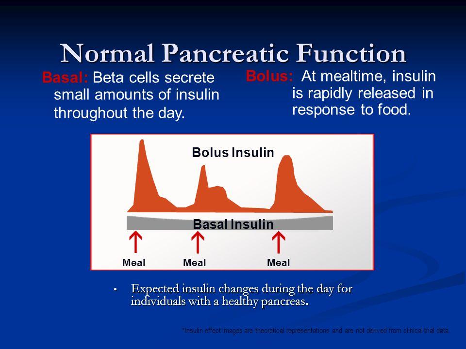 Normal Pancreatic Function
