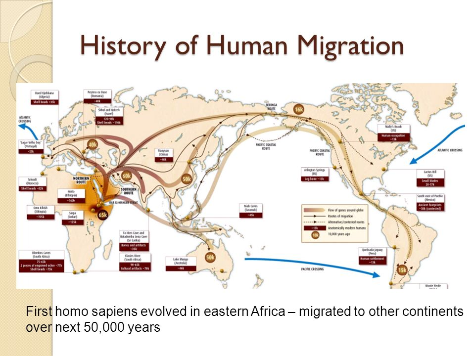 an introduction to the history of homo sapien 1 introduction: the big questions in modern human origins the first question  which should be addressed in any discussion of the origin and evolution of homo .