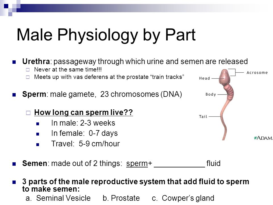 Sperm survival outside the body
