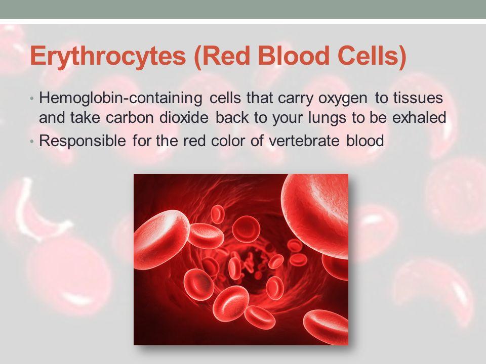 Erythrocytes (Red Blood Cells)