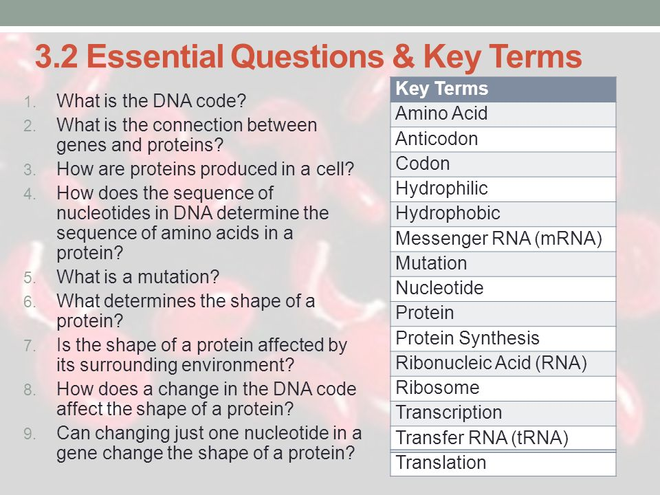 3.2 Essential Questions & Key Terms