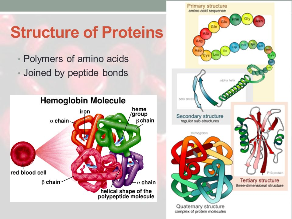 Structure of Proteins Polymers of amino acids Joined by peptide bonds