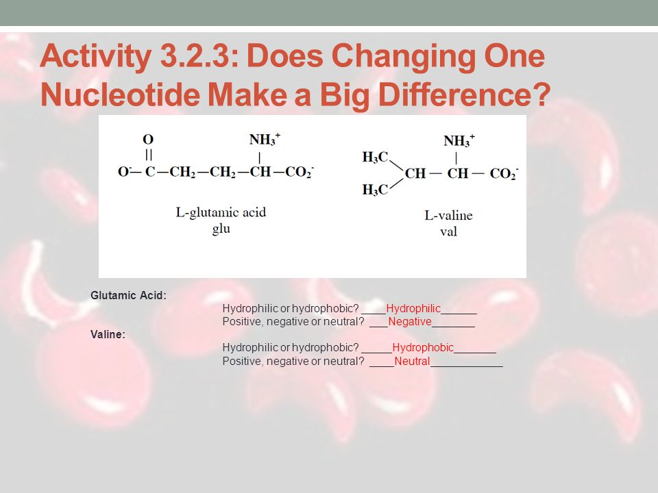 Activity 3.2.3: Does Changing One Nucleotide Make a Big Difference