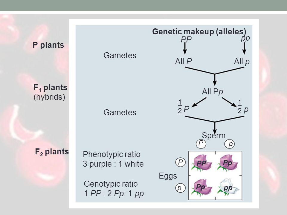 Genetic makeup (alleles)