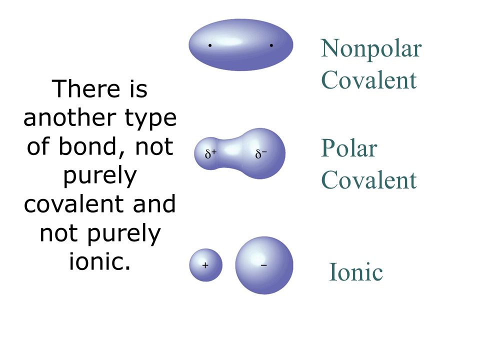 Chapter 1: Structure a... Nonpolar Covalent Bond Examples