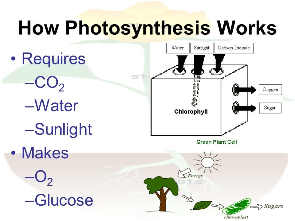How photosythesis works