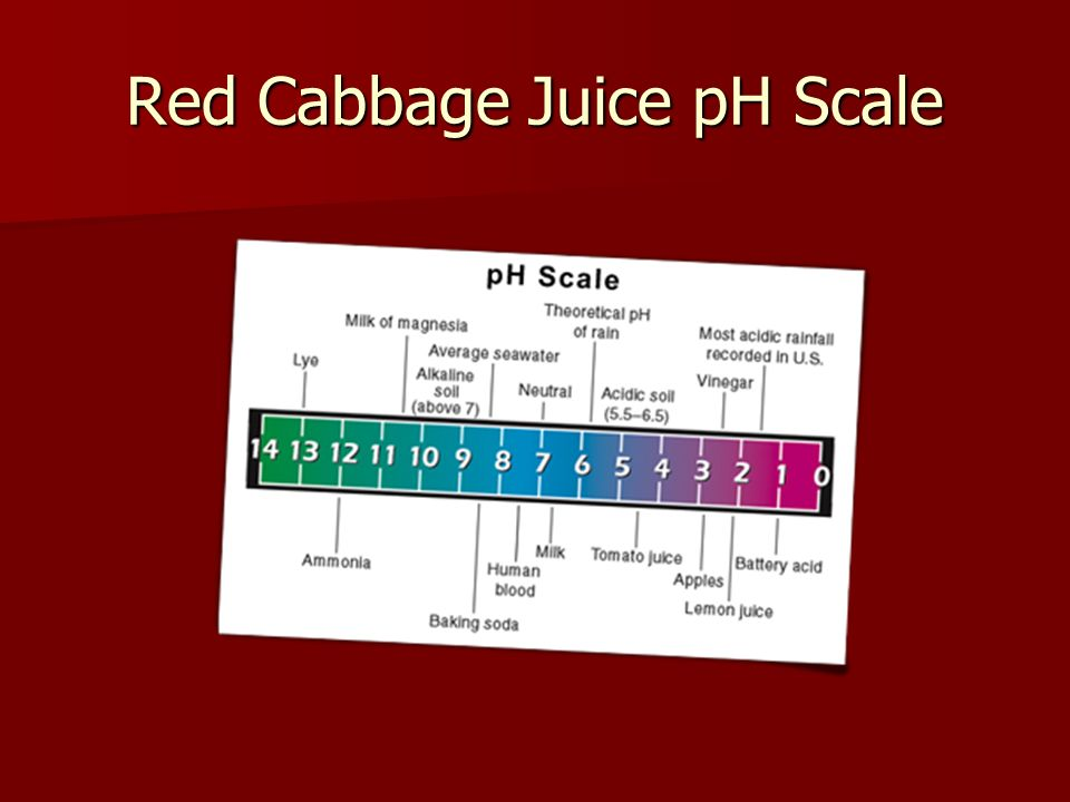 Axilacu Red Cabbage Juice Indicator Ph Scale 443239279 2018