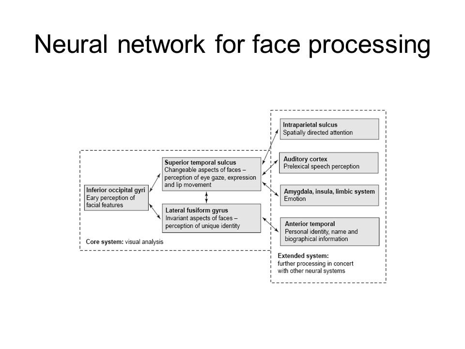 Neural facial processing
