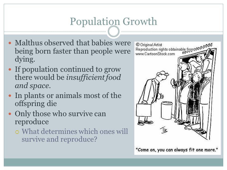 Population Growth Malthus observed that babies were being born faster than people were dying.