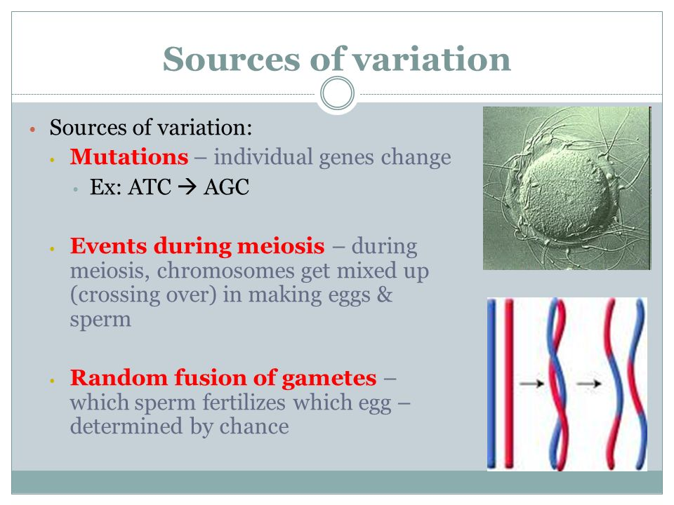 Sources of variation Sources of variation: