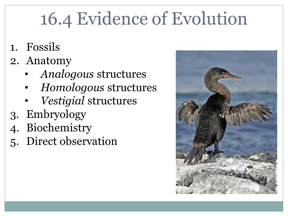 16.4 Evidence of Evolution Fossils Anatomy Analogous structures