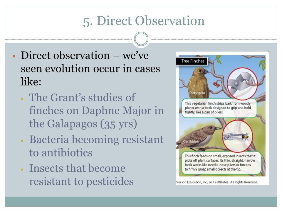 5. Direct Observation Direct observation – we've seen evolution occur in cases like: