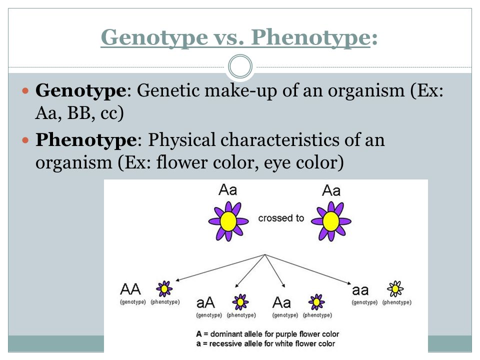 Genotype vs. Phenotype: