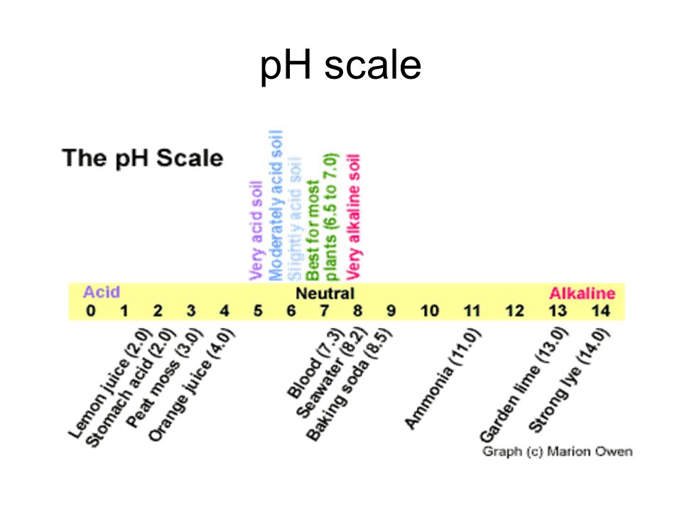 The Ph Scale Ppt Download - Imagez co