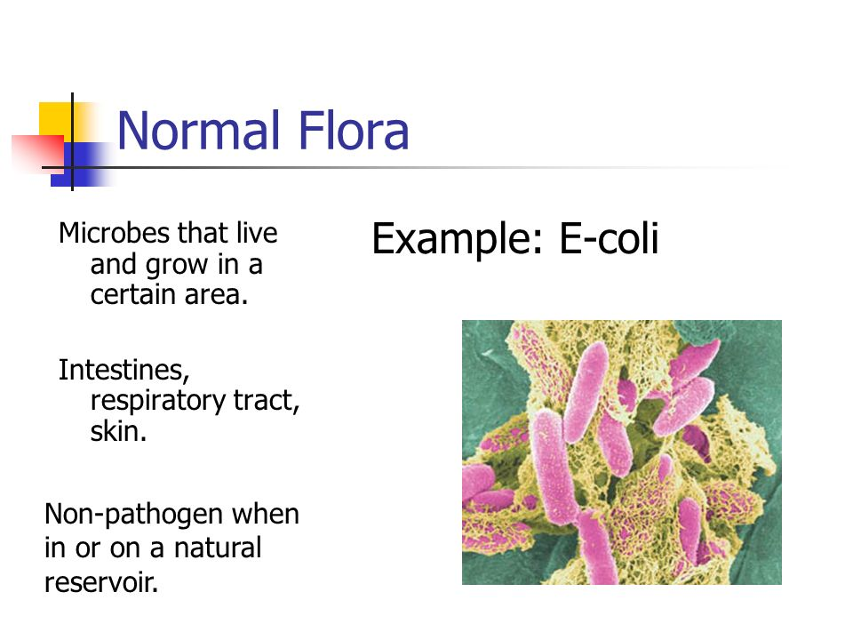 Normal Flora Example: E-coli