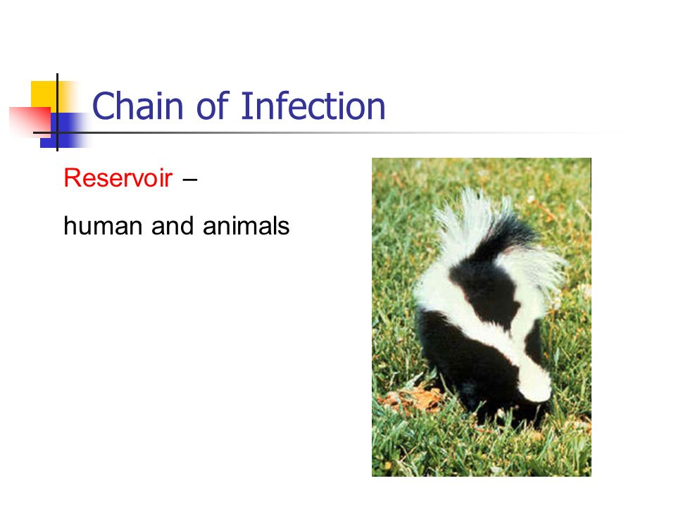 Chain of Infection Reservoir – human and animals