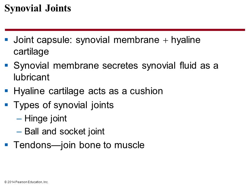 a synovial membrane secretes synovial fluid The synovial membrane secretes this fluid into the joint cavity it lubricates the joints and allows for ease of movement the synovial membrane is also the main place where inflammation occurs in joint diseases such as arthritis.