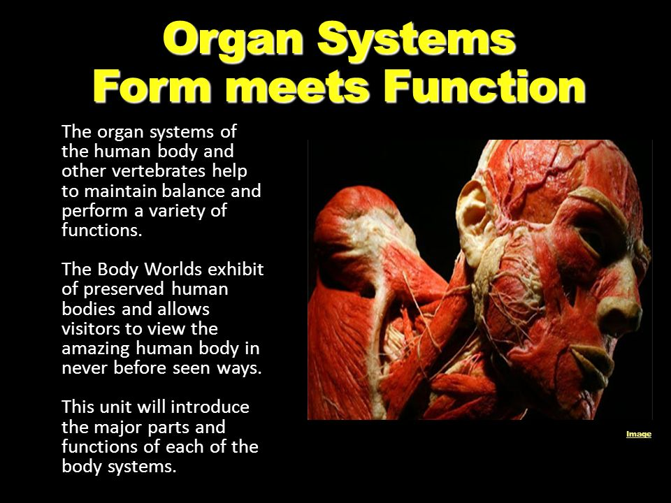 Organ Systems Form meets Function - ppt download