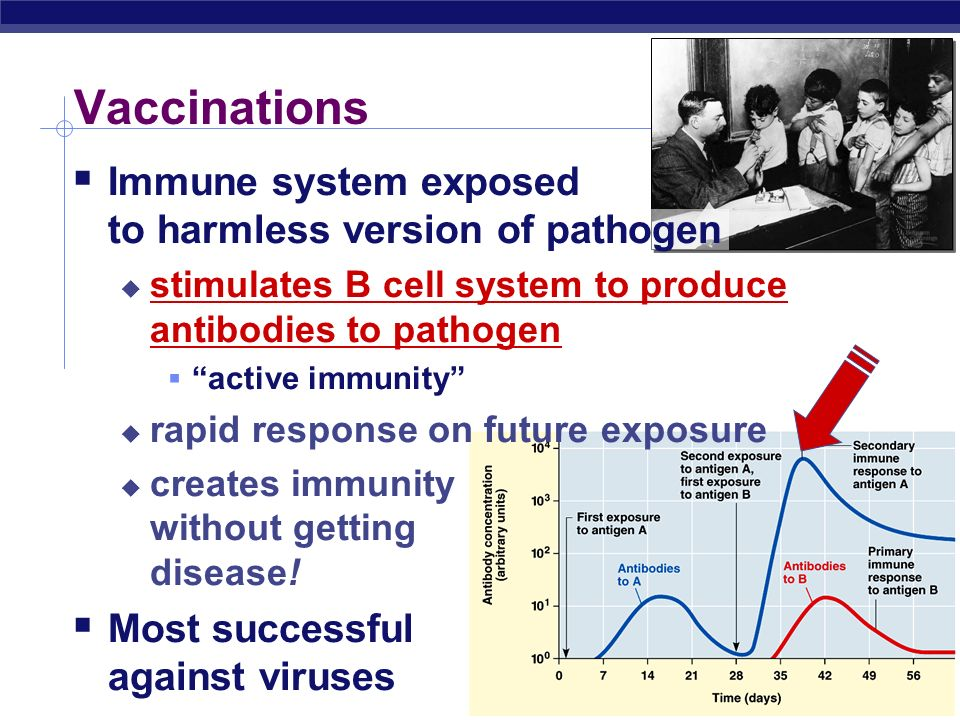 vaccinations immune system and vaccine Top 20 questions about vaccination  learn about the human immune system's response to vaccination  each disease for which vaccinations are recommended,.