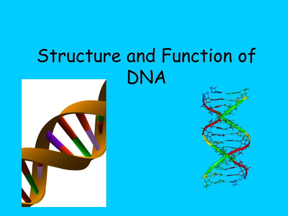 structure and function of biomolecules biology essay biomolecules – the building blocks of life this article is going to cover the current thinking with regards to the importance of carbohydrates, lipids and proteins.
