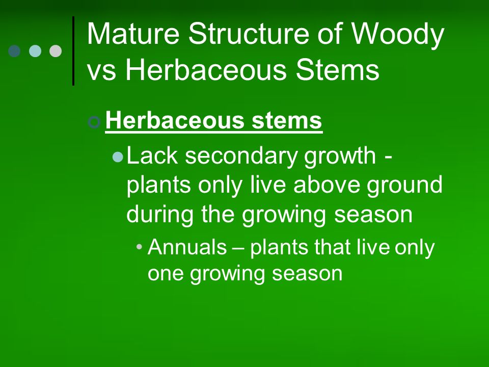 Roots Stems Leaves And Flowers Ppt Video Online Download