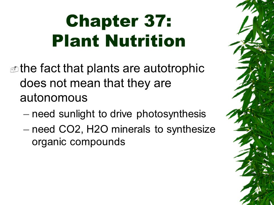 Plants That Do Not Need Sunlight Chapter 35 The Plant Body