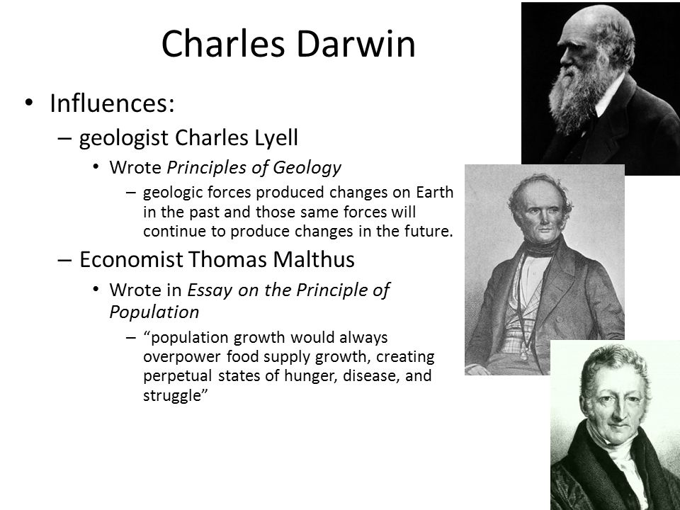 darwin essay principle population The rev thomas robert malthus published his essay on the principle of population as a response to the the ideas expressed by malthus were read by darwin.