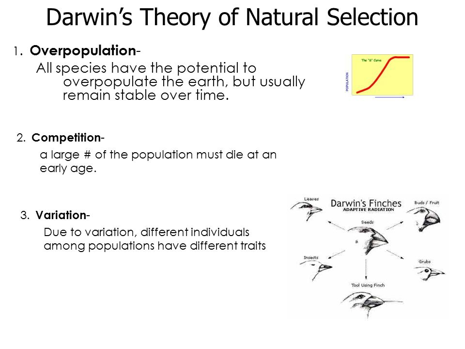 the theory of natural selection Advertisements: notes on darwin's theory of natural selection of evolution historical aspect: in 1831 darwin got an opportunity to travel on hms beagle (a ship in which charles darwin sailed around the world) for a voyage of world exploration.