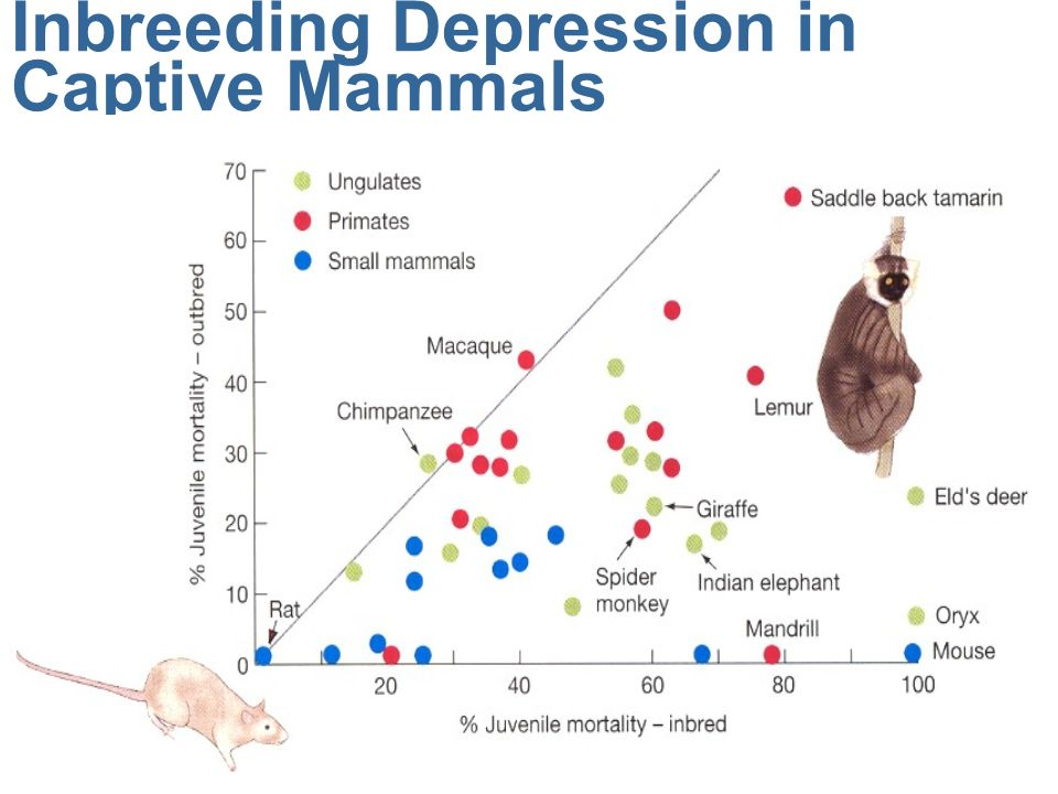 inbreeding depression Inbreeding and inbreeding depression inbreeding is • mating among relatives • which increases homozygosity why is inbreeding a conservation concern.