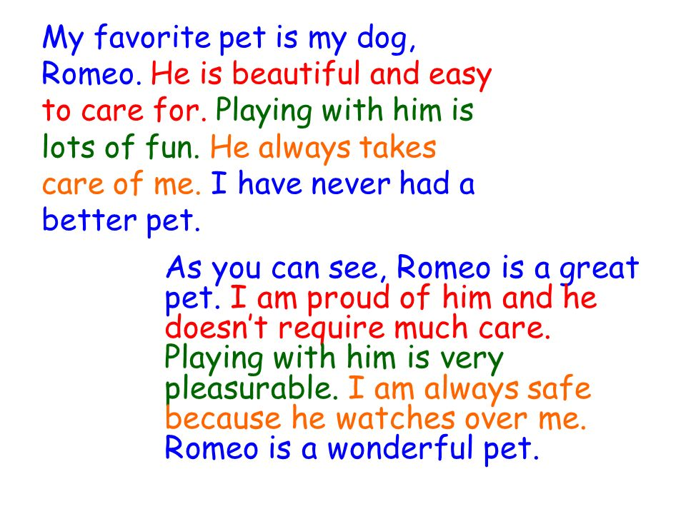 essay on my favorite pet dog My favourite animal is the dog the dog is a pet animal it is a four-footed animal it has two bright eyes it has two ears, sharp teeth and a small tail.