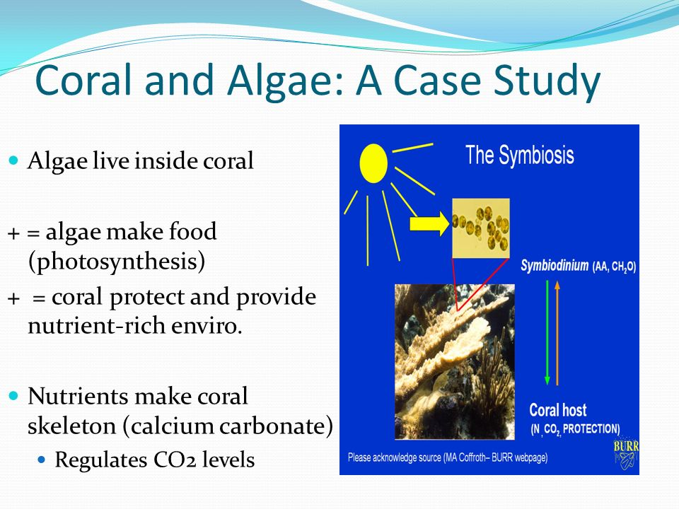 Photosynthesis case study