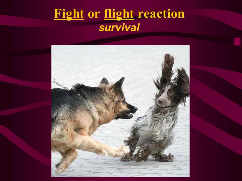 Fight or flight reaction survival