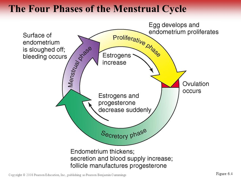 the four phases of the sexual response The excitement phase (also known as the desire phase) is the  during all four  phases of the human sexual response cycle.